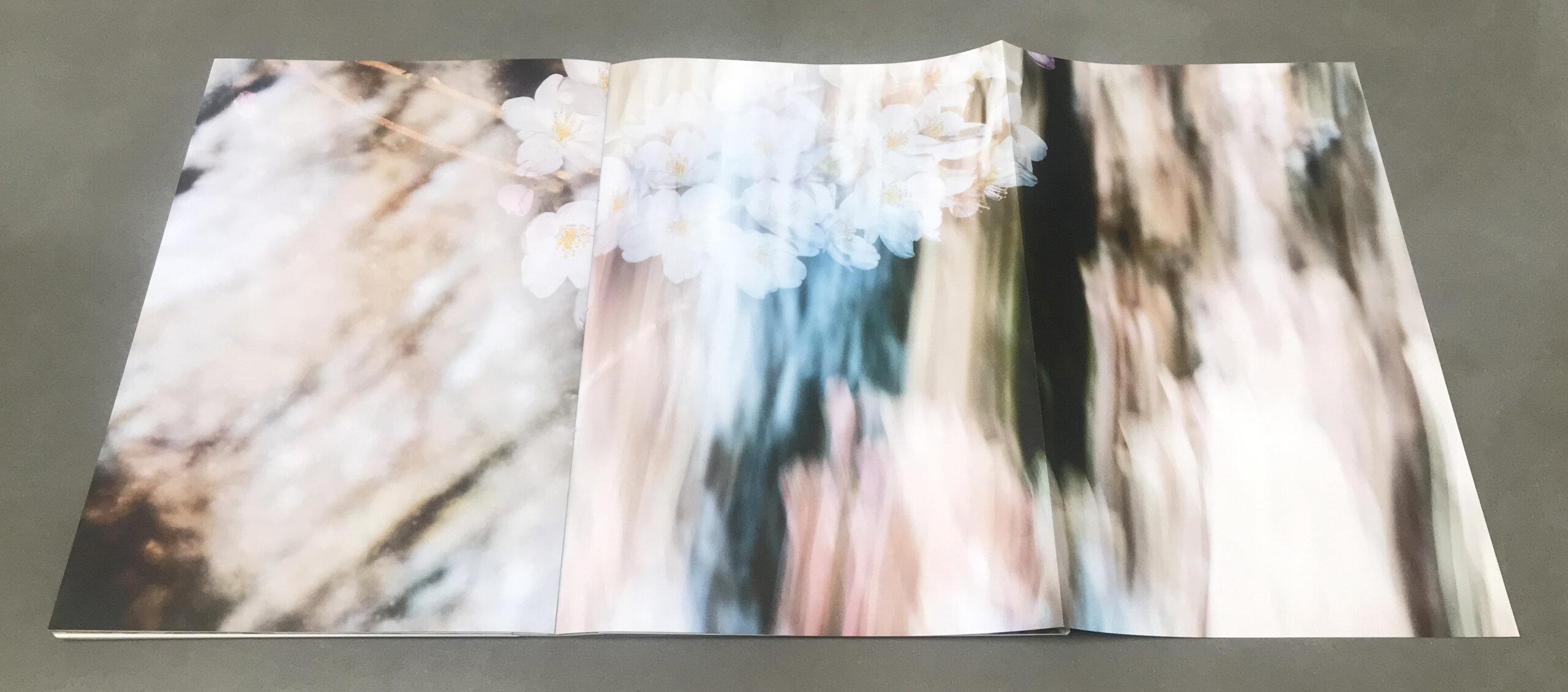 Yoshinori Mizutani SAKURA IBASHO photobook