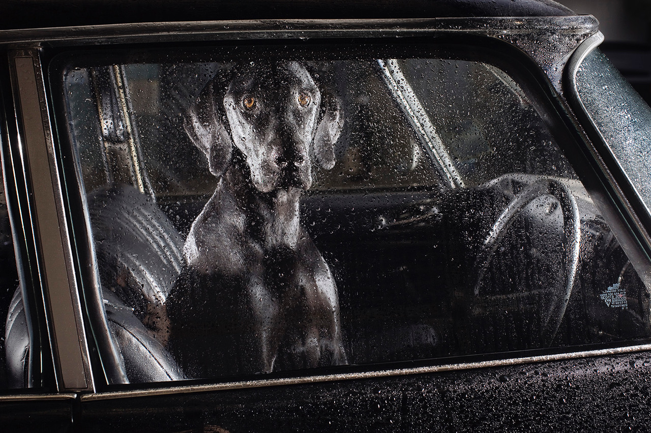 Dog in a car from The Silence of Dogs in Cars by Martin Usborne published by Hoxton Mini Press